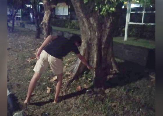Nusabali.com - tabrak-pohon-perindang-mahasiswa-tewas