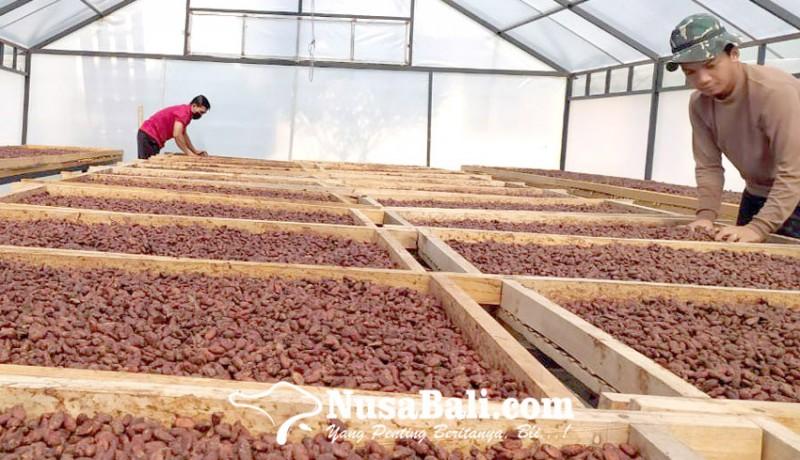 www.nusabali.com-petani-kakao-bali-dminta-bentuk-korporatisasi