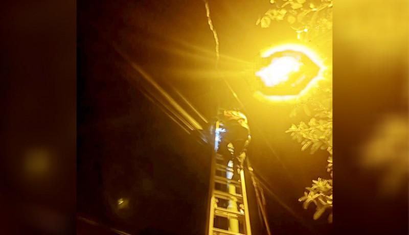 www.nusabali.com-digigit-tupai-kabel-milik-pln-terbakar