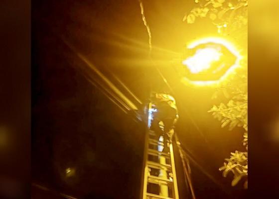 Nusabali.com - digigit-tupai-kabel-milik-pln-terbakar