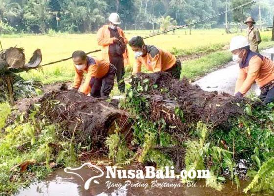 Nusabali.com - pohon-aren-timpa-kabel-listrik