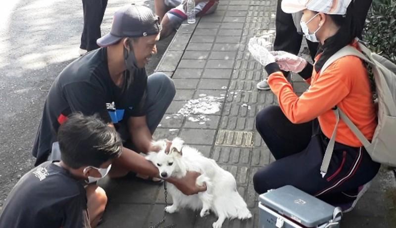 www.nusabali.com-kasus-anjing-rabies-muncul-di-batuagung