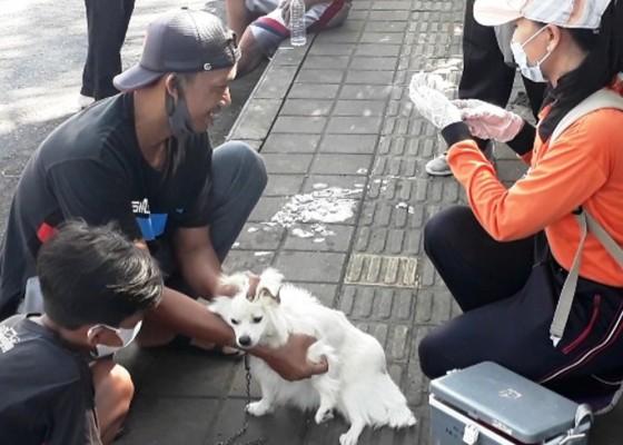 Nusabali.com - kasus-anjing-rabies-muncul-di-batuagung