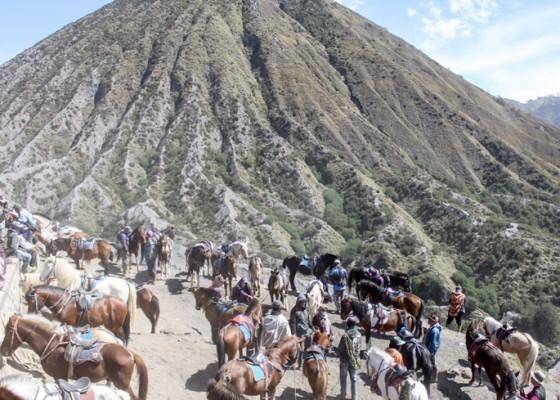 Nusabali.com - jasa-penyewaan-kuda-di-gunung-bromo