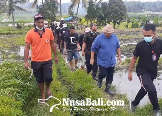 Nusabali.com - parwata-gotong-royong-di-subak-lepud-munduk-gaing