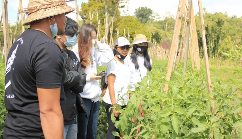 www.nusabali.com-milenial-yuk-ikuti-saturday-trip-melihat-potensi-pertanian-di-wijaya-farm-indonesia