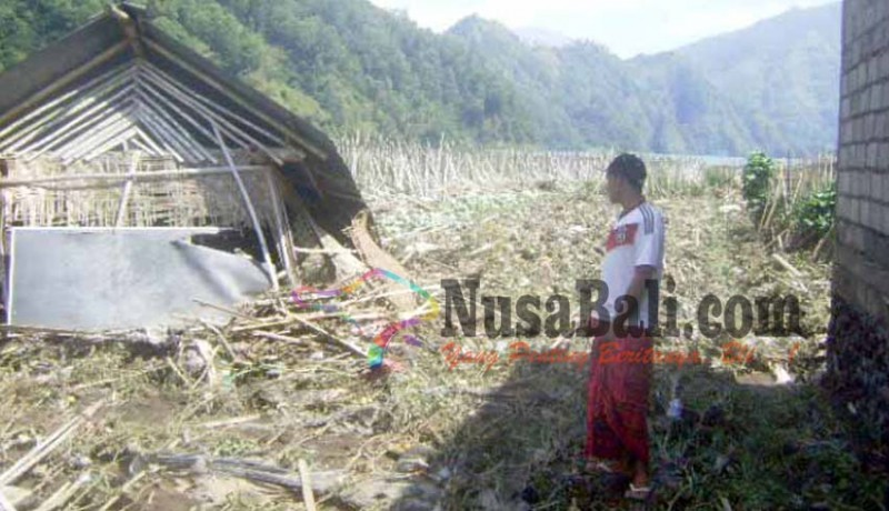 www.nusabali.com-20-ha-tanaman-hortikultura-hancur