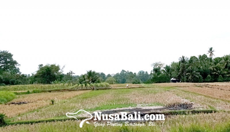 www.nusabali.com-kecamatan-tabanan-dan-marga-belum-masuk-sosialisasi-jalan-tol-gelombang-awal