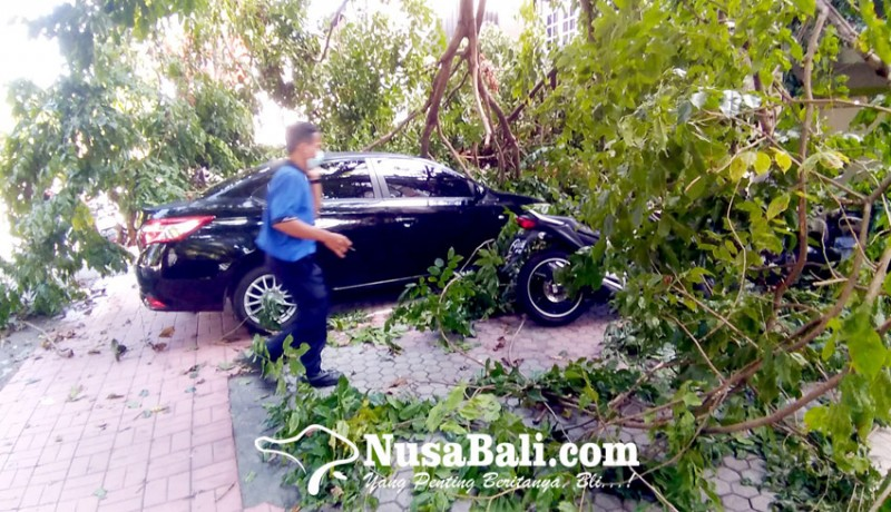 www.nusabali.com-dahan-pohon-ambruk-timpa-mobil-dan-motor-parkir