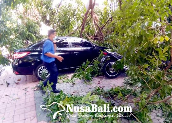 Nusabali.com - dahan-pohon-ambruk-timpa-mobil-dan-motor-parkir