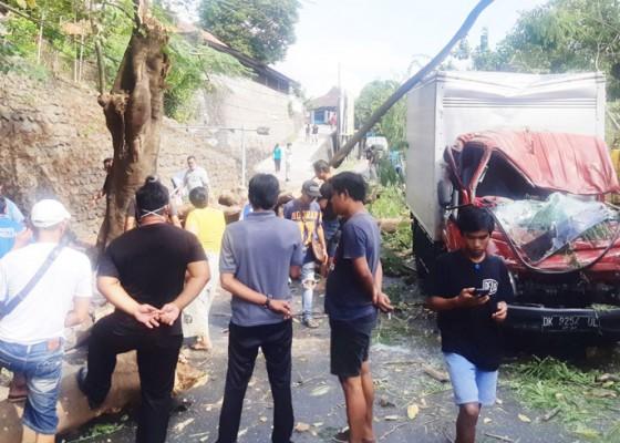 Nusabali.com - pohon-tumbang-timpa-truk-sopir-dan-kernet-selamat