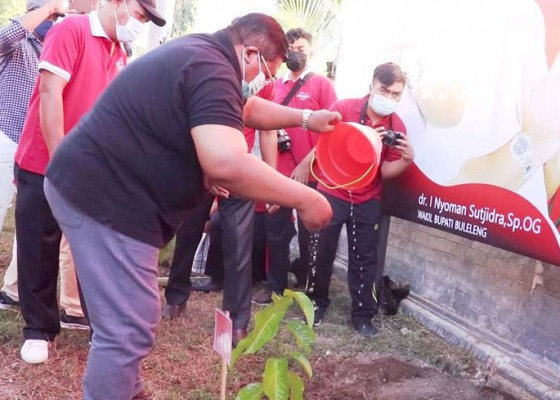 Nusabali.com - peringati-bulan-bung-karno-pemkab-buleleng-tanam-1000-pohon