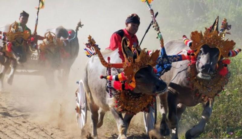 www.nusabali.com-hiasan-kepala-kerbau-antar-kadis-pariwisata-jembrana-ke-tahanan-kejari-negara