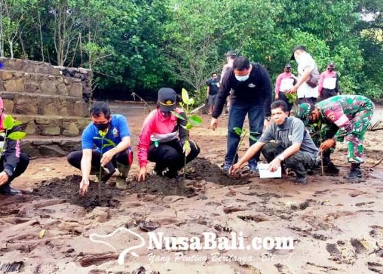Nusabali.com - cegah-abrasi-pantai-klecung-ditanami-mangrove