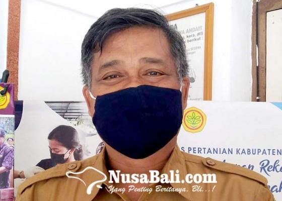 Nusabali.com - permintaan-sapi-dan-kambing-meningkat-jelang-idul-adha