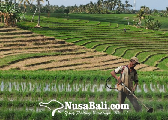 Nusabali.com - indeks-nilai-tukar-petani-naik-049-persen-petani-bali-masih-merugi
