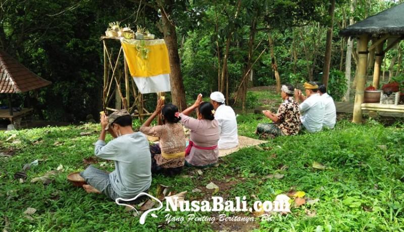www.nusabali.com-tumpek-kandang-wujud-harmonisasi-umat-hindu-terhadap-hewan-di-bali