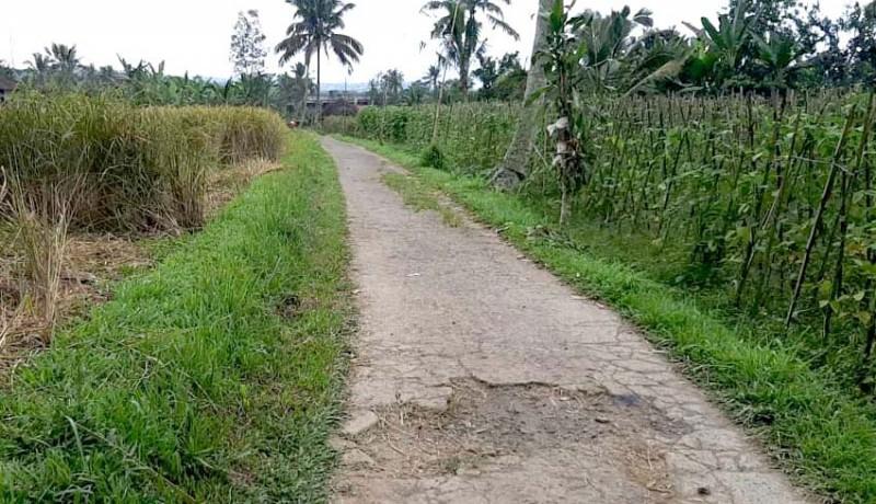 www.nusabali.com-8-subak-dan-kelompok-tani-di-tabanan-dapat-bantuan-jalan-usaha-tani
