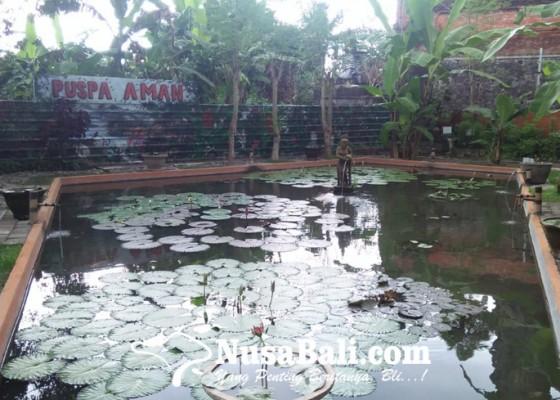 Nusabali.com - desa-ketewel-sukses-kembangkan-tanaman-produktif