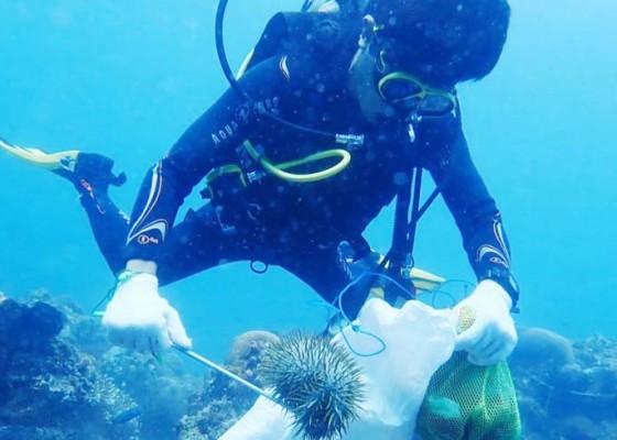 Nusabali.com - ppkm-darurat-konservasi-penyu-dan-bawah-laut-jalan-terus