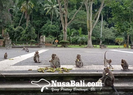 Nusabali.com - pengelola-khawatir-anggaran-operasional-menipis