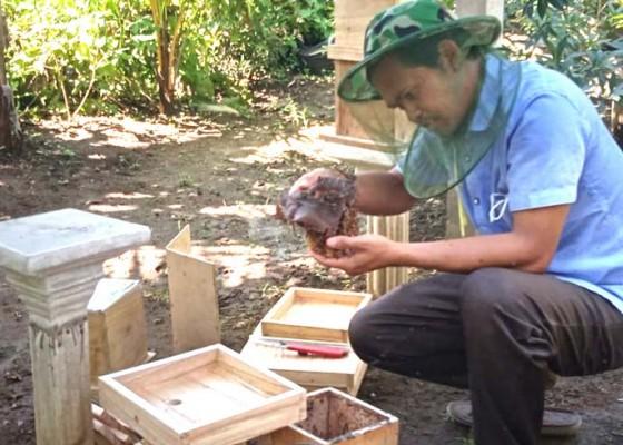 Nusabali.com - pandemi-madu-kela-kela-masih-diminati