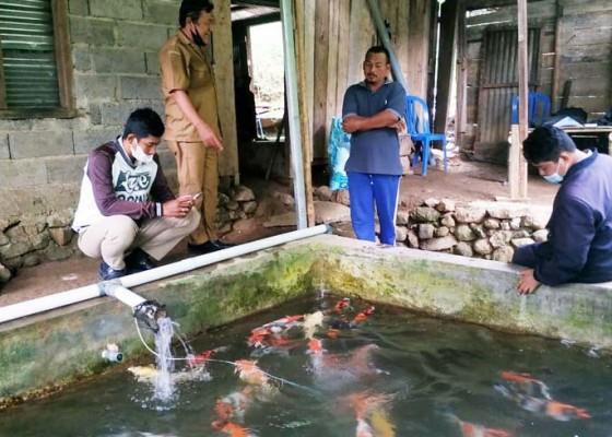 Nusabali.com - lima-pembudidaya-ikan-koi-disuntik-bantuan-indukan
