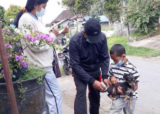 Nusabali.com - warga-desa-peninjoan-digigit-anjing-rabies