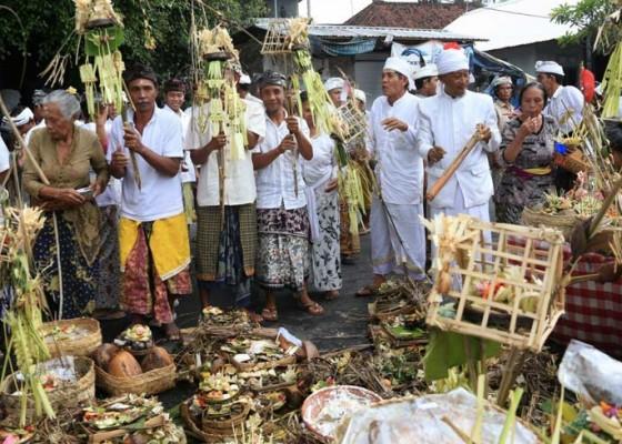 Nusabali.com - krama-desa-gelar-pacaruan
