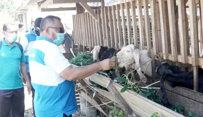 www.nusabali.com-jelang-idul-adha-pemkab-jembrana-siapkan-28-kambing-dan-6-sapi
