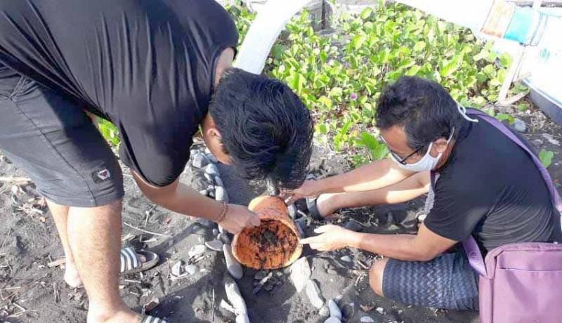 www.nusabali.com-aktivis-dan-nelayan-lepas-90-tukik-di-pantai-lebuhan-jalung