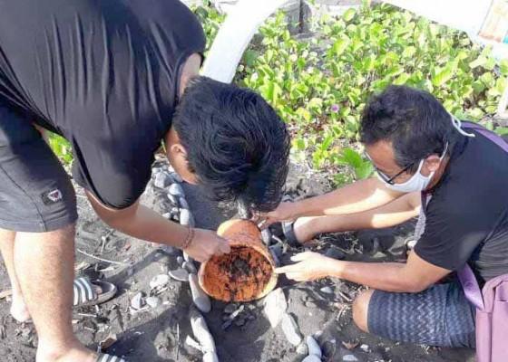 Nusabali.com - aktivis-dan-nelayan-lepas-90-tukik-di-pantai-lebuhan-jalung