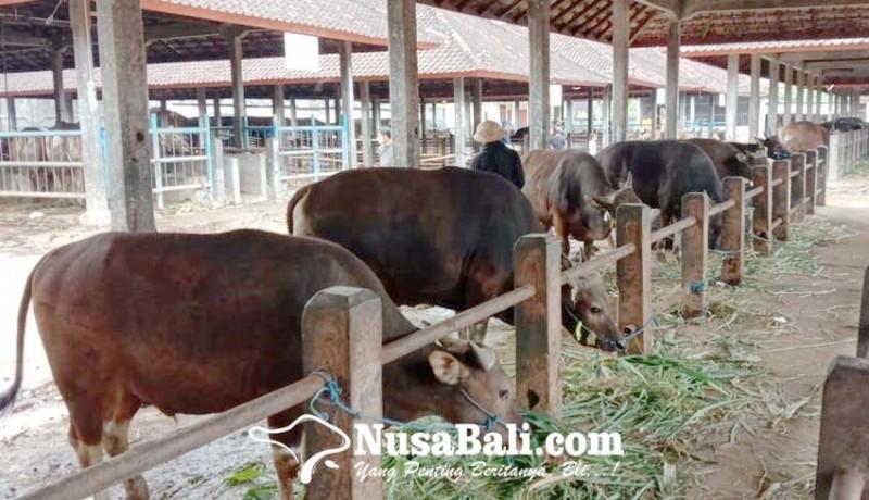 www.nusabali.com-sapi-bali
