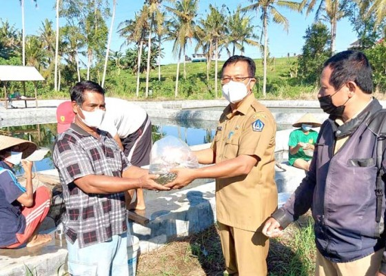 Nusabali.com - badung-bantu-kelompok-pembudidaya-61-ribu-bibit-ikan