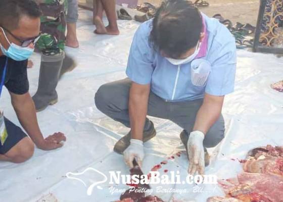 Nusabali.com - periksa-hewan-kurban-idul-adha-distan-temukan-cacing-hati