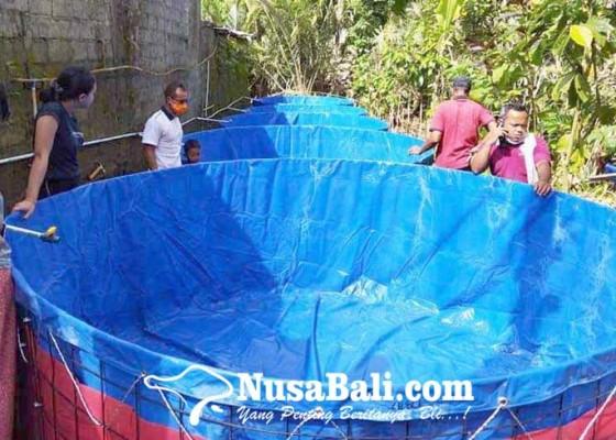 Nusabali.com - perbekel-amerta-bhuana-buat-5-kolam-bioflok