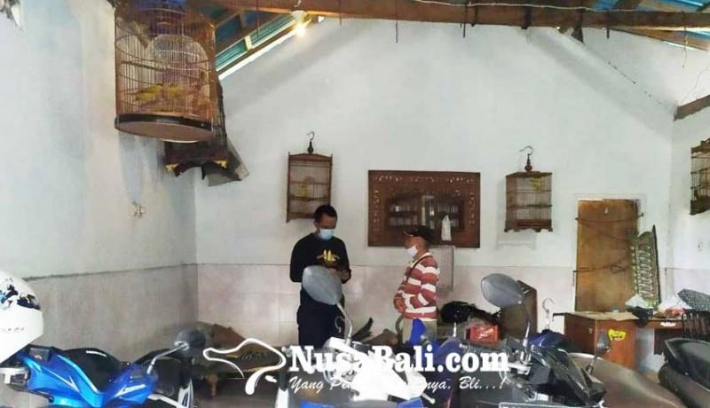 www.nusabali.com-bobol-showroom-pencuri-gasak-5-ekor-burung