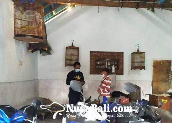 Nusabali.com - bobol-showroom-pencuri-gasak-5-ekor-burung