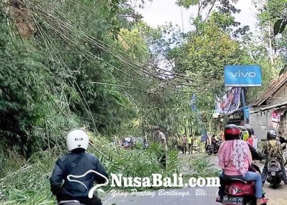 Nusabali.com - rumpun-bambu-longsor-lalu-lintas-terganggu