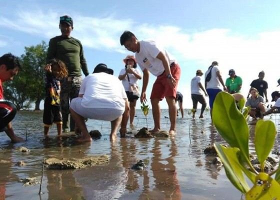 Nusabali.com - menjaga-asa-dari-mangrove