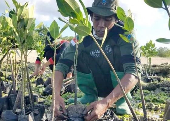 Nusabali.com - tanam-5000-pohon-per-tahun-perbaiki-kerusakan-mangrove-60-persen