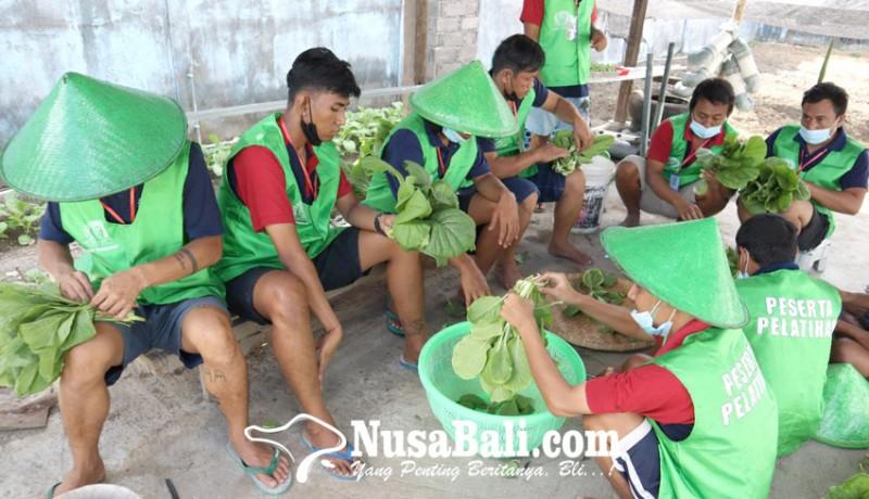 www.nusabali.com-lapas-kerobokan-latih-wbp-jadi-petani-hidroponik