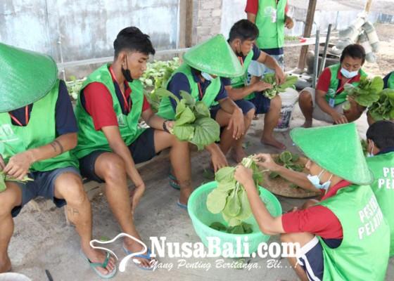 Nusabali.com - lapas-kerobokan-latih-wbp-jadi-petani-hidroponik
