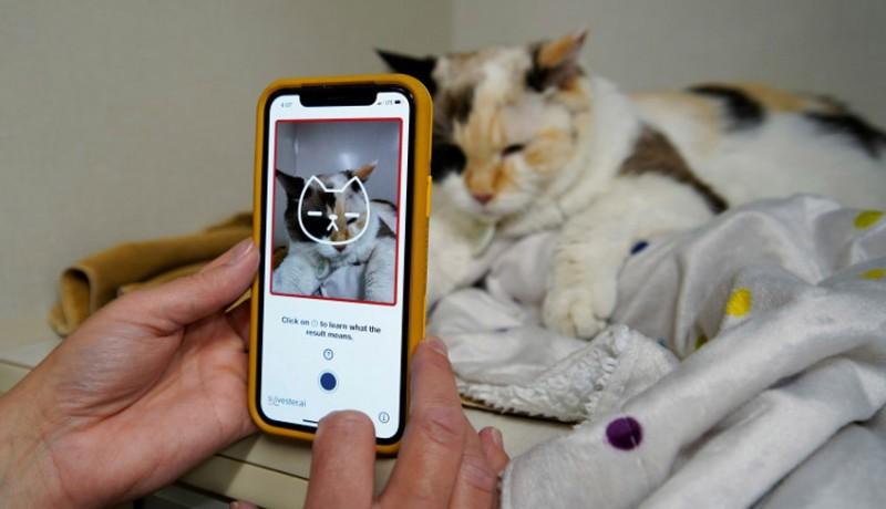 www.nusabali.com-apakah-kucing-anda-bahagia-cek-lewat-aplikasi-ini