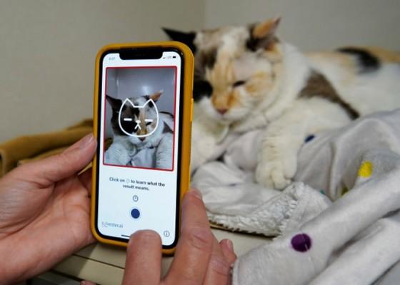 Nusabali.com - apakah-kucing-anda-bahagia-cek-lewat-aplikasi-ini