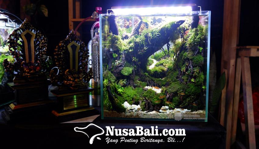 Nusabali Com Juara Aquascape Contest Bali 2020 Berbagi Tips