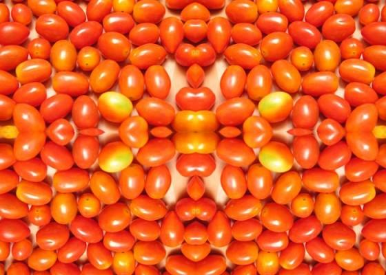Tomat Cherry - Senggol Bali