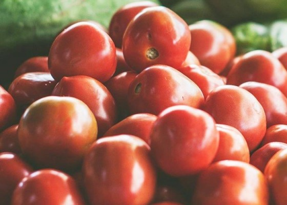 Tomat Taiwan - Senggol Bali
