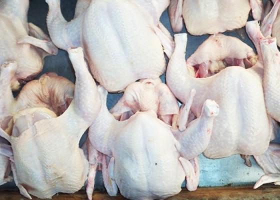 Daging Ayam - Senggol Bali