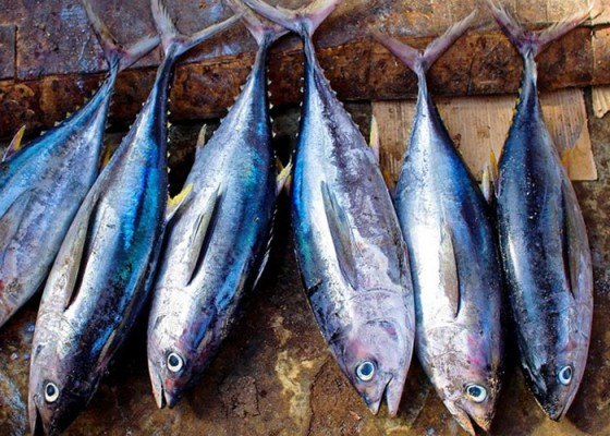 Ikan Tuna - Senggol Bali